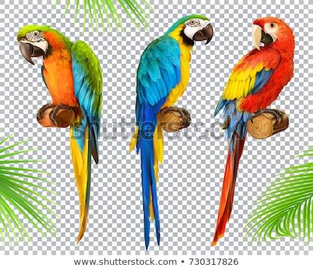 Papağan kuş yalıtılmış hayvan karikatür ayarlamak Stok fotoğraf © cienpies