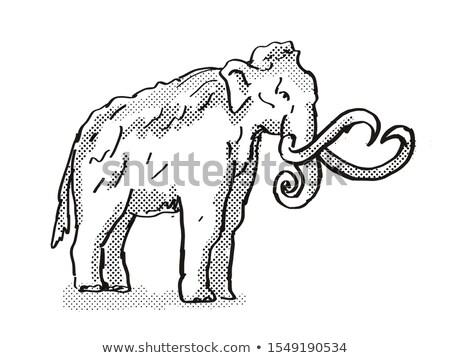 Columbia Mammoth Extinct  North American Wildlife Cartoon Drawing Stock photo © patrimonio