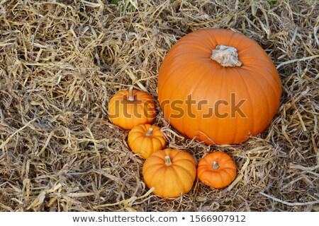 Cztery jesienny mini dynia Zdjęcia stock © sarahdoow