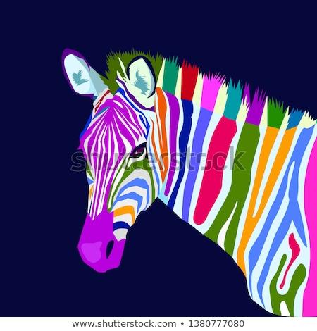 зебры природы фон Африка черный обои Сток-фото © Bananna