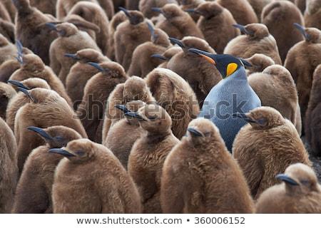 oneven · een · man · abstract · menigte · groep - stockfoto © leeser
