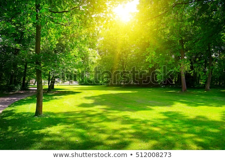 green park at sunset stock photo © photocreo