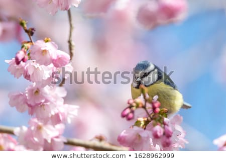 Stock photo: Spring feelings