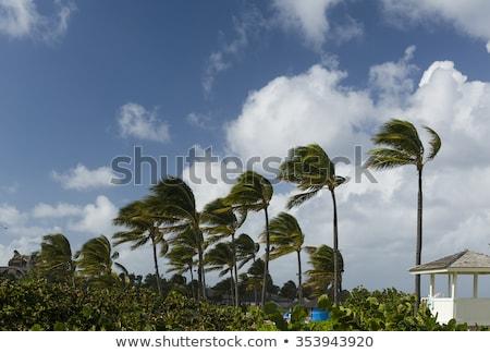 何 風の強い 日 少年 子 ストックフォト © ivonnewierink