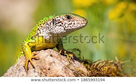 Zöld gyík fa erdő test levél Stock fotó © azamshah72