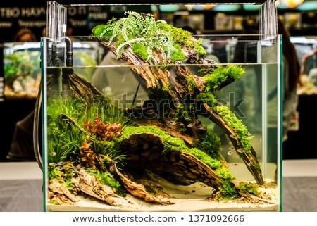 Aquarium Studio Fotografie Wasser isoliert weiß Stock foto © prill