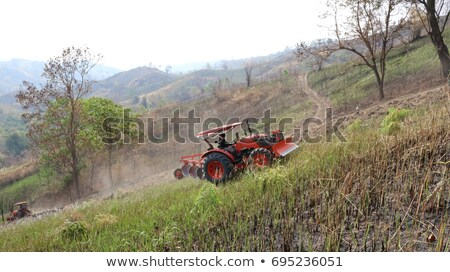 orman · zemin · doğal · manzara · güney - stok fotoğraf © prill