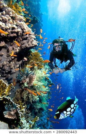 Korall trópusi Vörös-tenger víz nap természet Stock fotó © stephankerkhofs