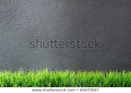 Stock photo: Green grass against a grey wall