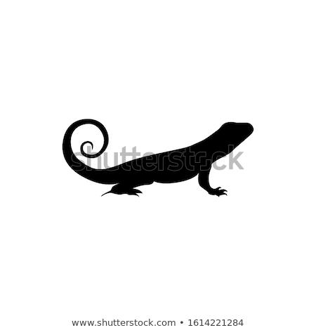 silhouette of iguana Stock photo © perysty