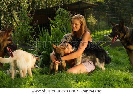 boldog · szőke · nő · pózol · kettő · kutyák · izolált - stock fotó © acidgrey