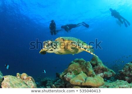 teknős · Vörös-tenger · hal · tájkép · tenger · háttér - stock fotó © stephankerkhofs