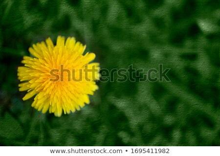 Közelkép lövés zöld fű elmosódott felső konzerv Stock fotó © ori-artiste