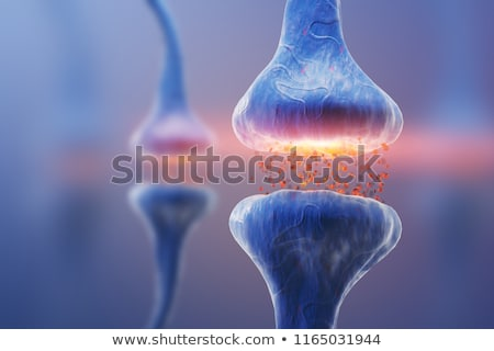 Human Nerve Cell Synapse Receptor Stock photo © Lightsource