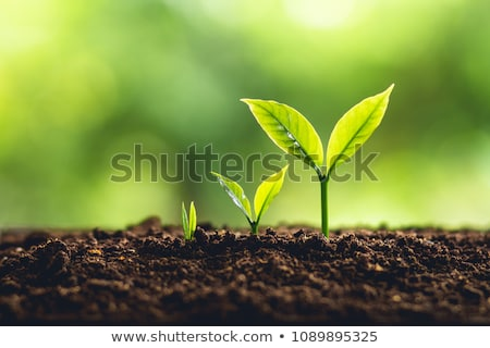 Personal Growth Stock photo © Lightsource