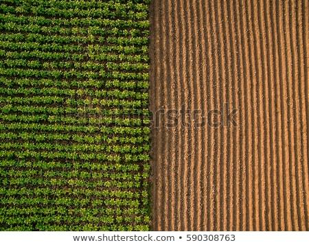 Mintázott föld textúra eke tavasz tájkép Stock fotó © taviphoto
