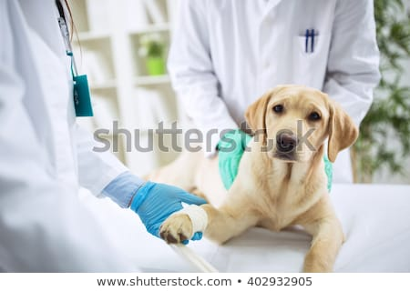 женщины ветеринар собака медицина молодые человек Сток-фото © photography33