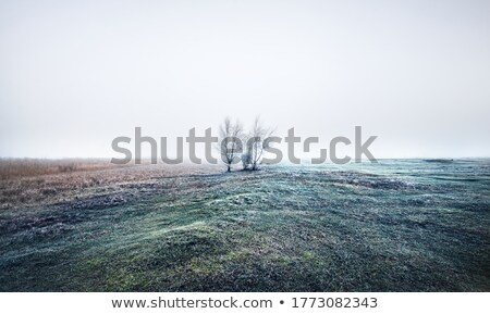 empty fields in the autumn morning stock photo © capturelight
