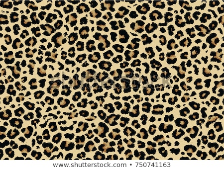leopard print vector stock photo © arenacreative