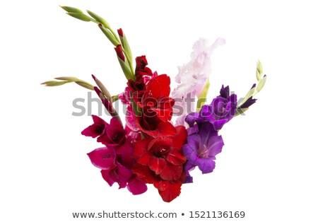 красный · Iris · макроса · изолированный · белый · фон - Сток-фото © tetkoren