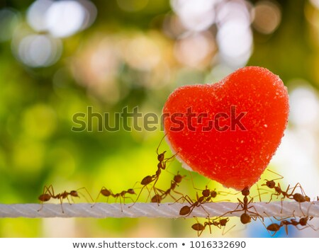 Ant Herzen Illustration braun wenig Liebe Stock foto © heliburcka