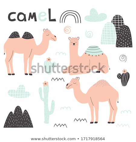 baby camel cartoon stock photo © aminmario11