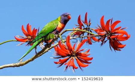 regenboog · tuin · vogel · Blauw · Rood · tropische - stockfoto © alex_grichenko