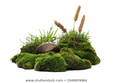 Gras stenen geïsoleerd witte blad gezondheid Stockfoto © natika