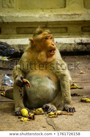 обезьяны · каменные · Blue · Sky · Таиланд · ребенка · глазах - Сток-фото © juniart