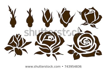 декоративный изолированный закрывается бутон цветок красоту Сток-фото © ulyankin