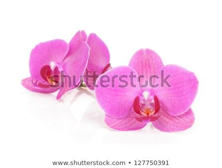 Rosa orquídeas creciente jardín hermosa Foto stock © suemack