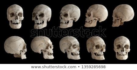 insan · kafatası · gözler · sigara · örnek · beyaz - stok fotoğraf © oblachko