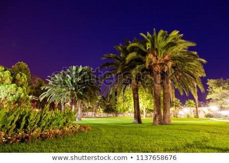 View of coconut palms in Montenegro, Balkans Stock photo © master1305