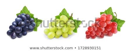 red grapes illustration stock photo © morphart