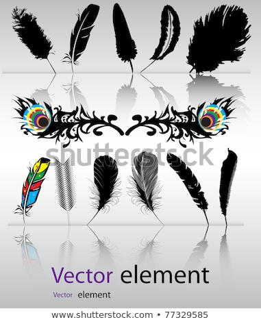 Feather Background in vector format. stock photo © piccola