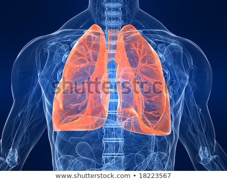 human male anatomy skeleton and highlighted lungs 3d illustrat stock photo © kirill_m