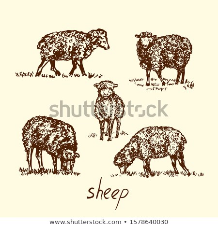 sheep collection vector silhouette stock photo © istanbul2009