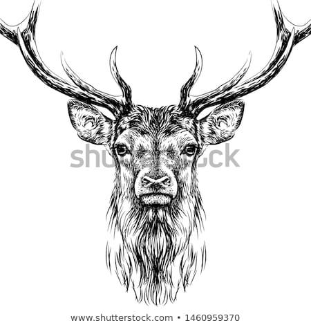 благородный оленей иллюстрация геральдика татуировка дизайна Сток-фото © Genestro