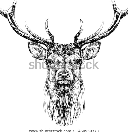 Nobil cerb ilustrare tatuaj proiect Imagine de stoc © Genestro
