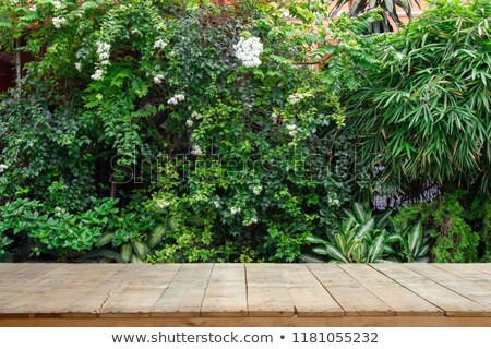 A wooden fence with green plants Stock photo © bluering