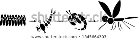 蚊 · 漫画 · スタイル - ストックフォト © jiaking1