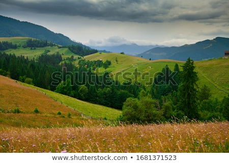 Stock photo: Mountain landscape with a fir tree on a hillside on a sunny day