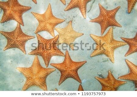 starfish on seabed Stock photo © adrenalina