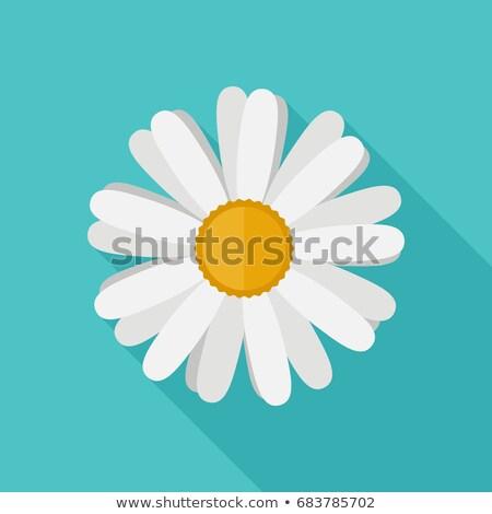 Manzanilla icono flor estilo largo sombra Foto stock © biv