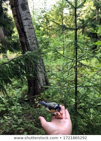 Little chickadees in the birdhouse Stock photo © benkrut