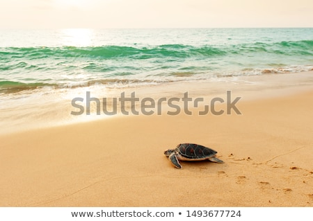 Turtle heading out to sea on black beach Stock photo © IS2