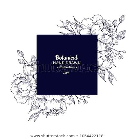 Vinage Rose Flower Etching Engraved Woodcut  Stock photo © Krisdog