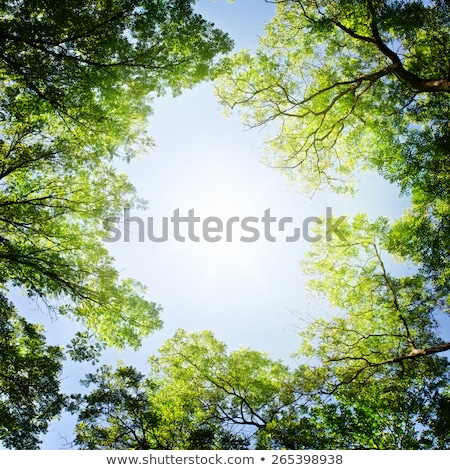 Trees and sky from below Stock photo © Givaga