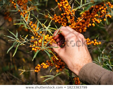 Man reaching up to branch Stock photo © IS2