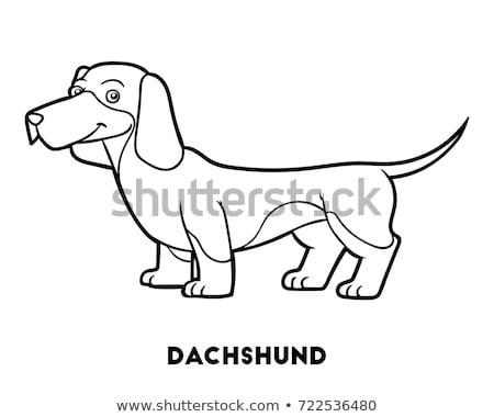 Teckel hond karakter cartoon kleurboek zwart wit Stockfoto © izakowski